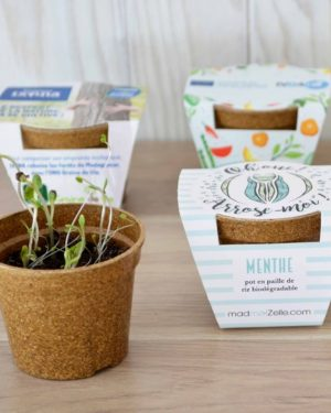 kit à planter dans un pot en paille de riz biodégradable